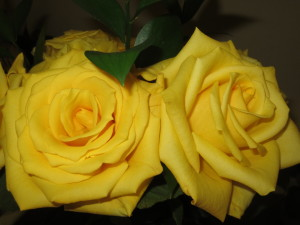 Yellow roses are my reminder of Naomi