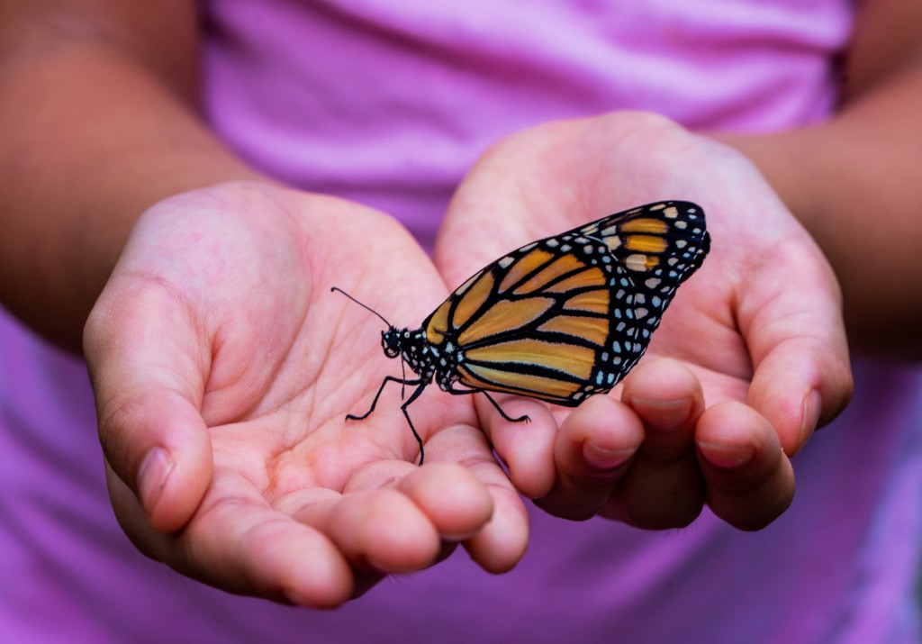 Holding a butterfly
