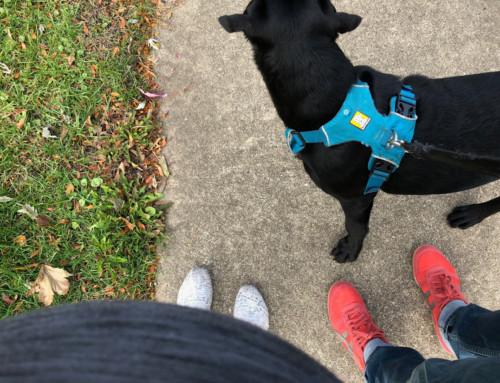 Kasey's Bump Day Blog, Week 22: Feeling Good?