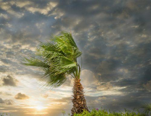 Lori's Bump Day Blog, Week 15: Storm-battered, Still Standing