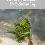 Lori's bump day, week 15: Storm-battered, Still Standing