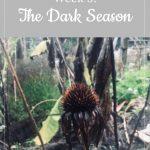 flower in the woods - Libby's Bump Day Blog, Week 9: The Dark Season