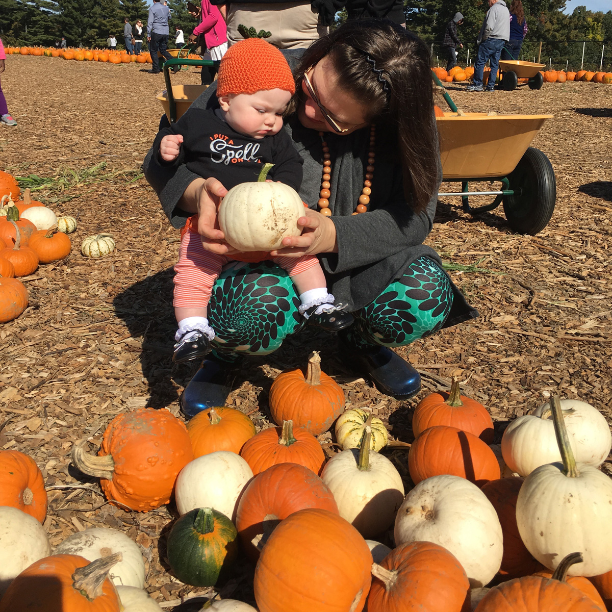 Picking a white pumpkin on baby's first trip to the pumpkin patch