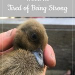 baby duck - Libby's Bump Day Blog, Week 13: Tired of Being Strong