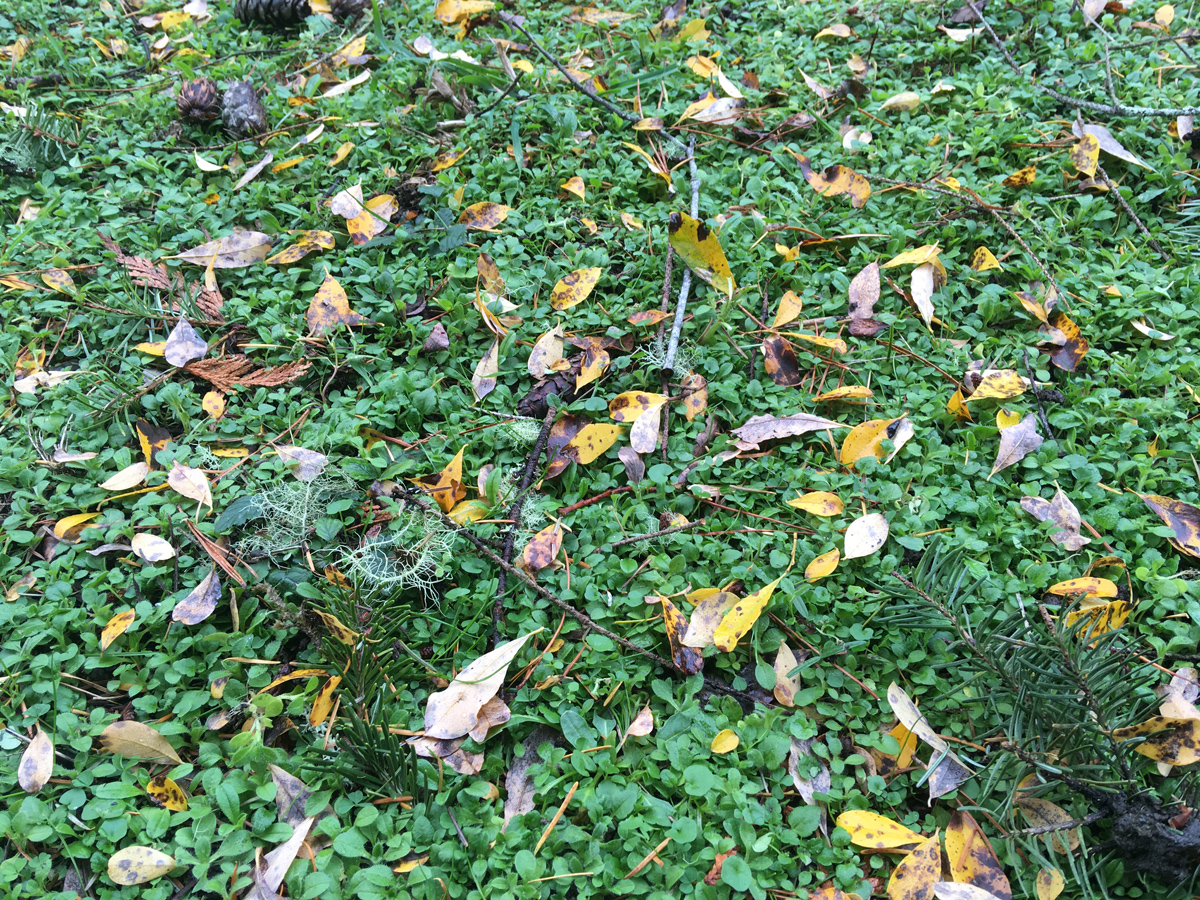 Fall foliage - Libby's Bump Day Blog, Week 14: It's Been a Year