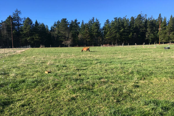 cow in a field - Libby's Bump Day Blog, Week 15: First Flutters