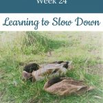 ducks in a field - Libby's 24-week bump day blog: learning to slow down