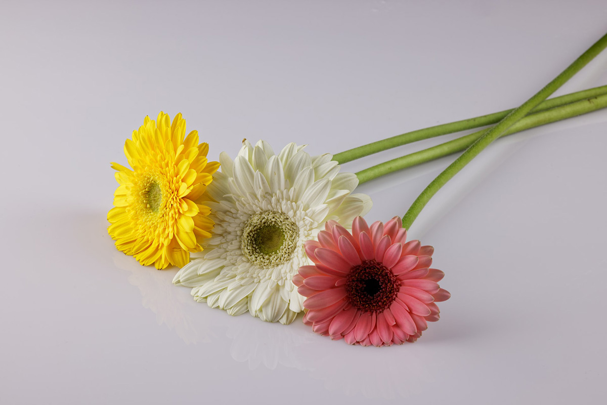 flowers - What to Do for a Bereaved Mother on Mother's Day