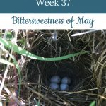 Eggs in nest - Libby's 37-week bump day blog: bittersweentess of May